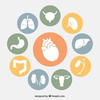 human-organs-icons_23-2147506486